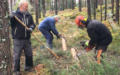 Uppstart för skogsröjarna