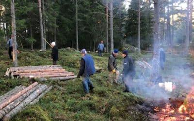 Skogsröjning 2020